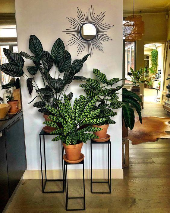Living Room Indoor Plants